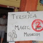 magic mushroom 11