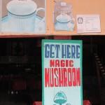 magic mushroom 6
