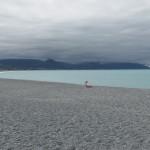 kaikoura beach
