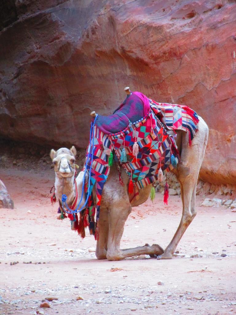 A Petra, dove i cammelli fanno yoga
