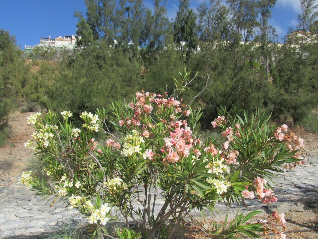 vale la pena allungare un po', per vedere piante così, on o?