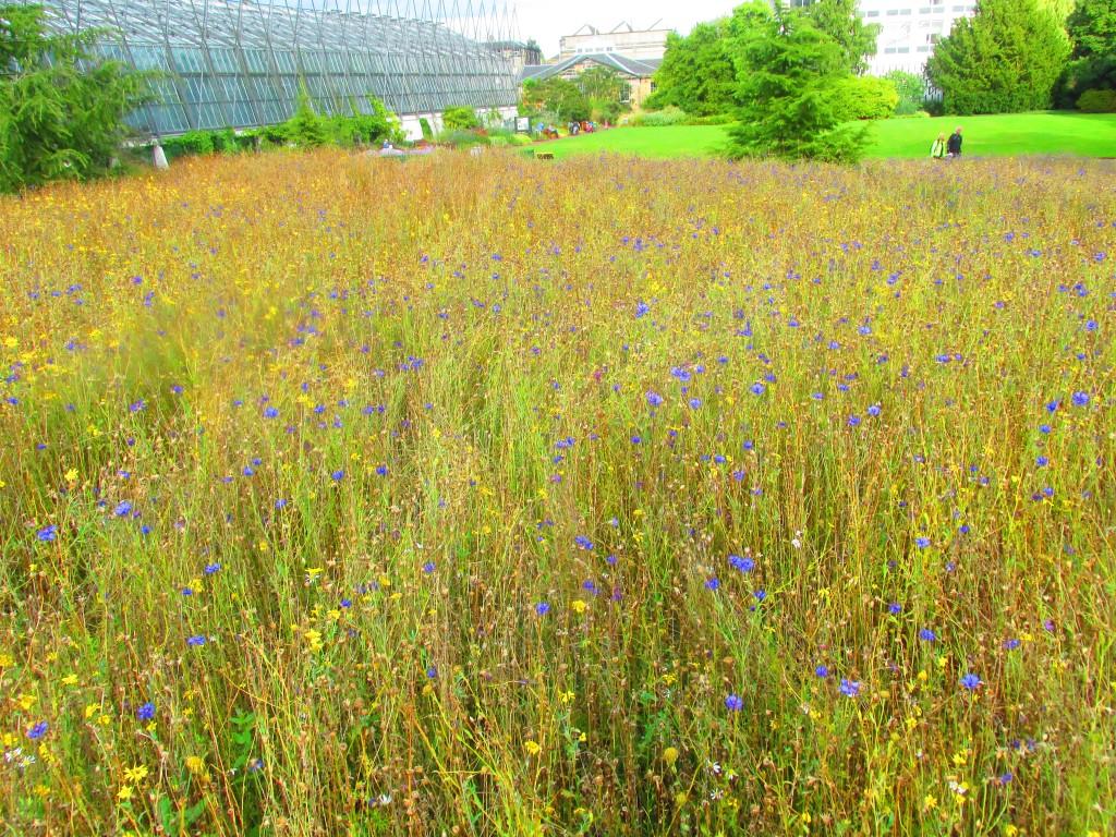 Giardini botanici reali