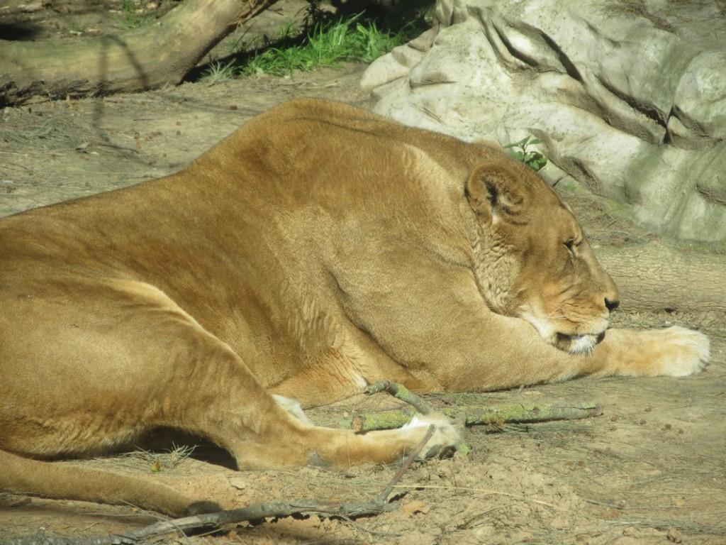 leone Ayamonte