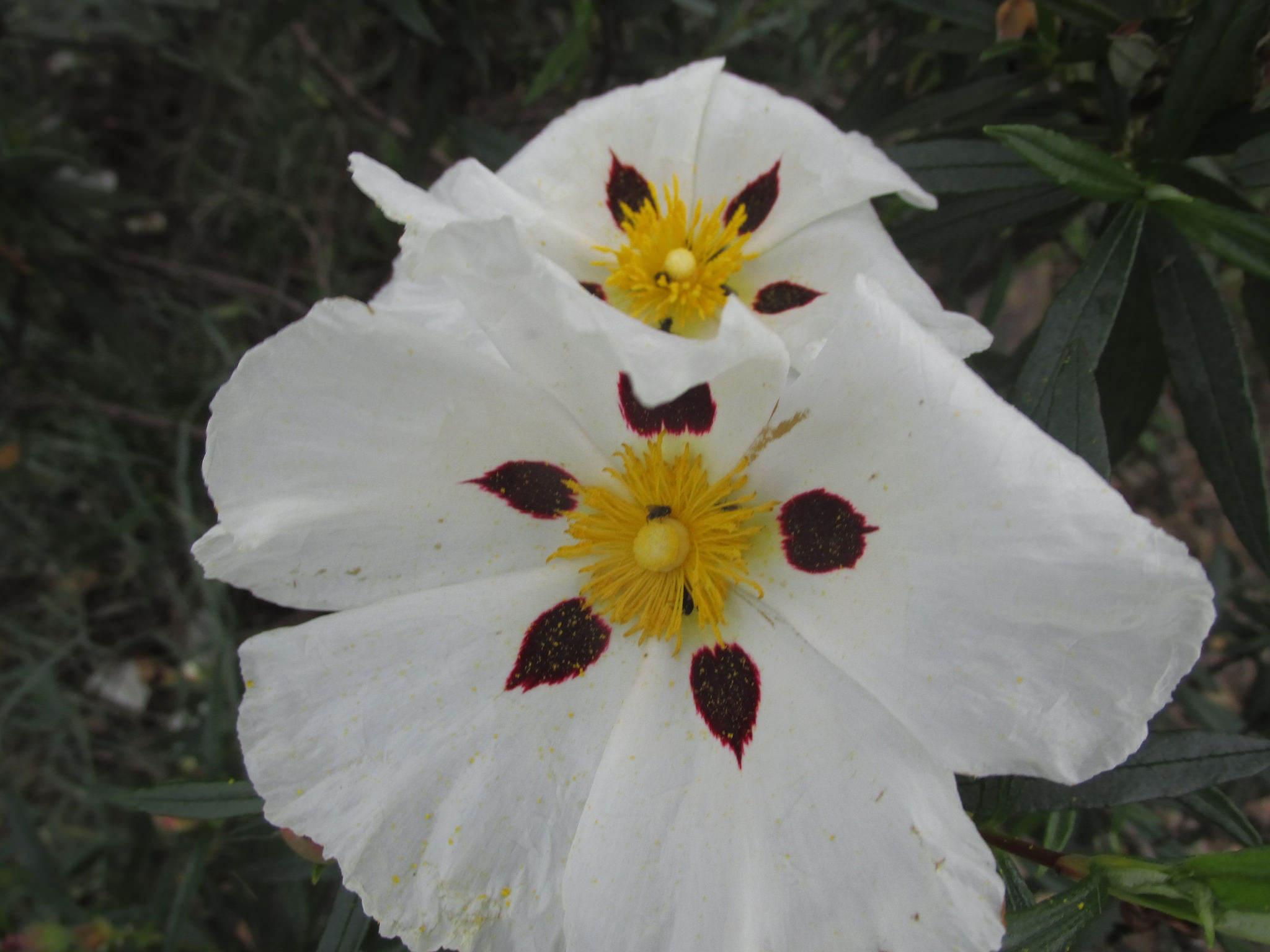fiori Algarve