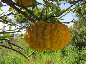 frutta e verdura di stagione in Portogallo