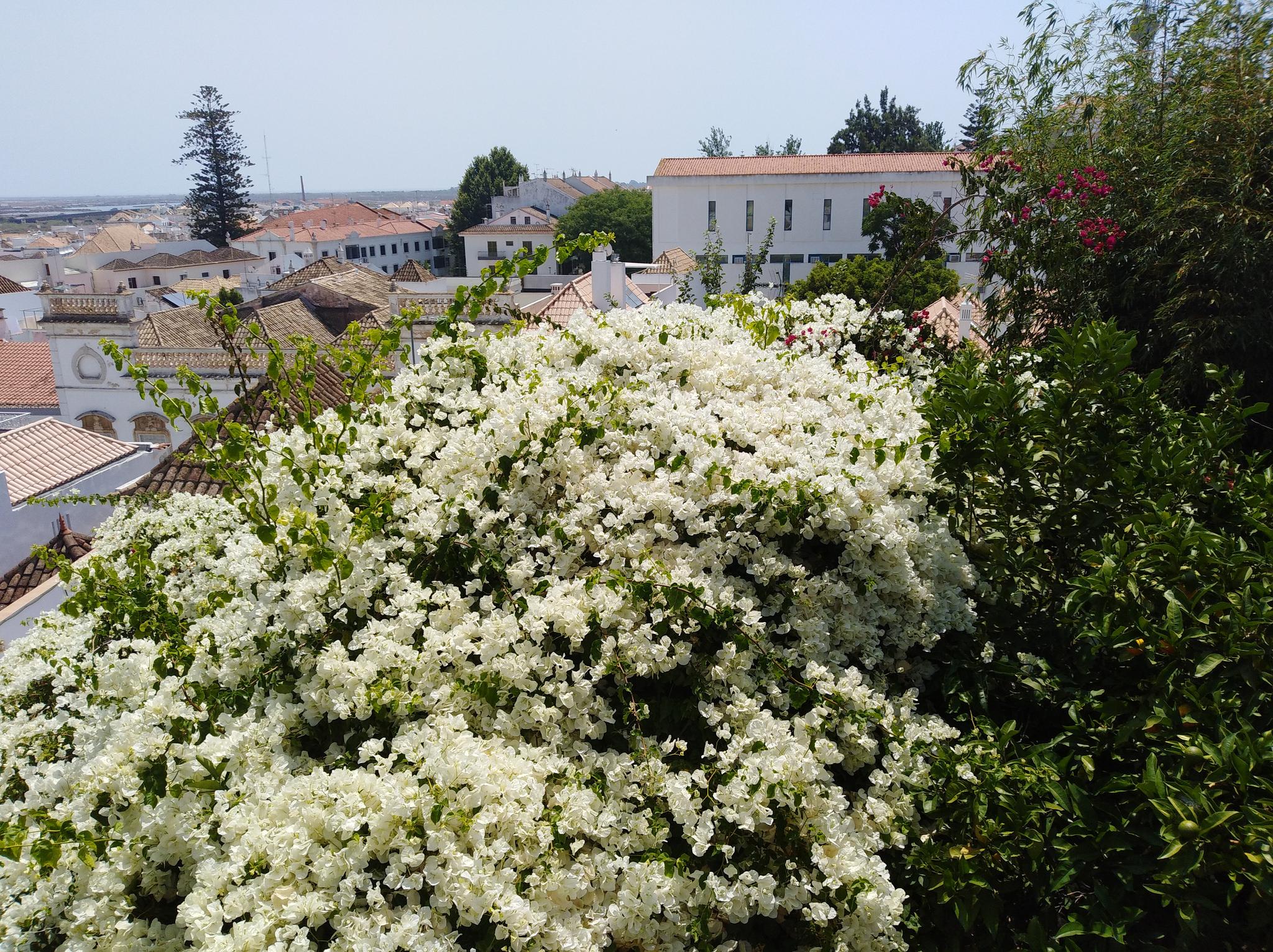 Il Castello di Tavira, uno dei miei posti preferiti in Algarve