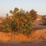 cactus desert